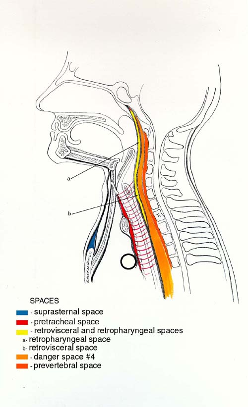 neck_spaces.jpg